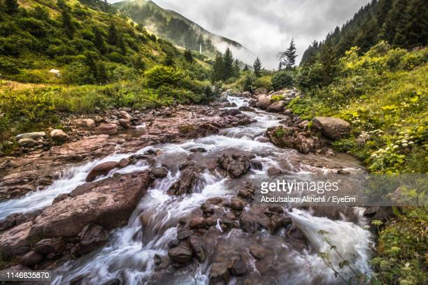 stream flowing in forest - trabzon stock photos and pictures