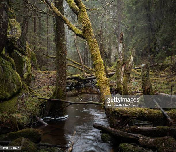 stream flowing in forest - arne jw kolstø stock pictures, royalty-free photos & images
