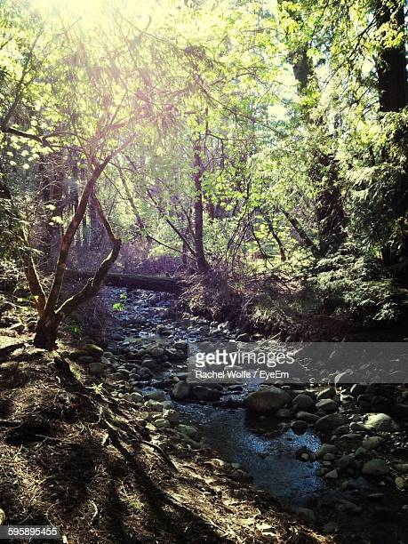 stream flowing in forest - rachel wolfe stock pictures, royalty-free photos & images