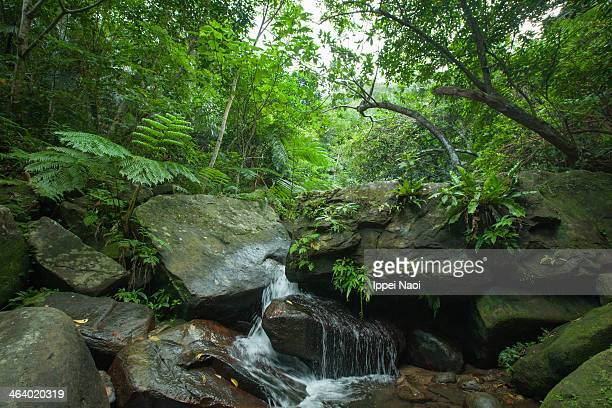 stream flowing in tropical rainforest, okinawa - ippei naoi stock photos and pictures