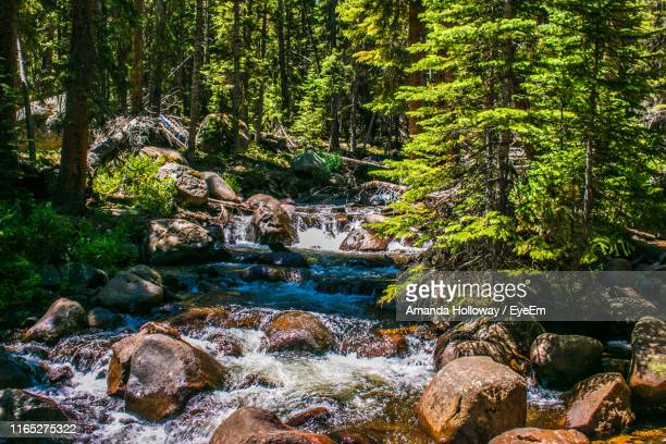 stream flowing on rocks in forest - amanda and amanda stock pictures, royalty-free photos & images