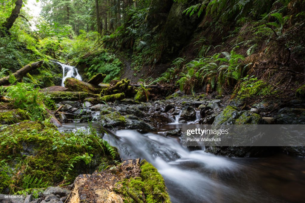Stream flowing over rocks in forest, Moran State Park, Orcas Island, Puget Sound, San Juan Islands, Washington State, USA : Stock Photo