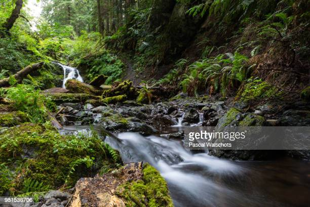 Stream flowing over rocks in forest, Moran State Park, Orcas Island, Puget Sound, San Juan Islands, Washington State, USA