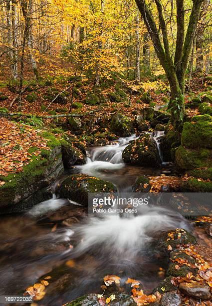 stream flowing through autumn forest - comunidad foral de navarra fotografías e imágenes de stock