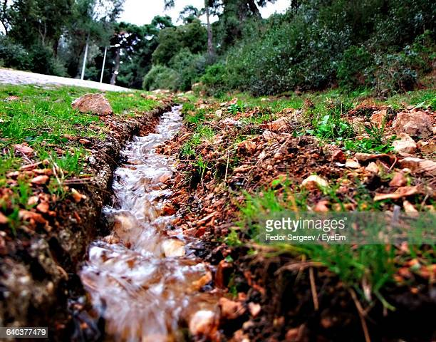 stream flowing through forest - fedor stock pictures, royalty-free photos & images