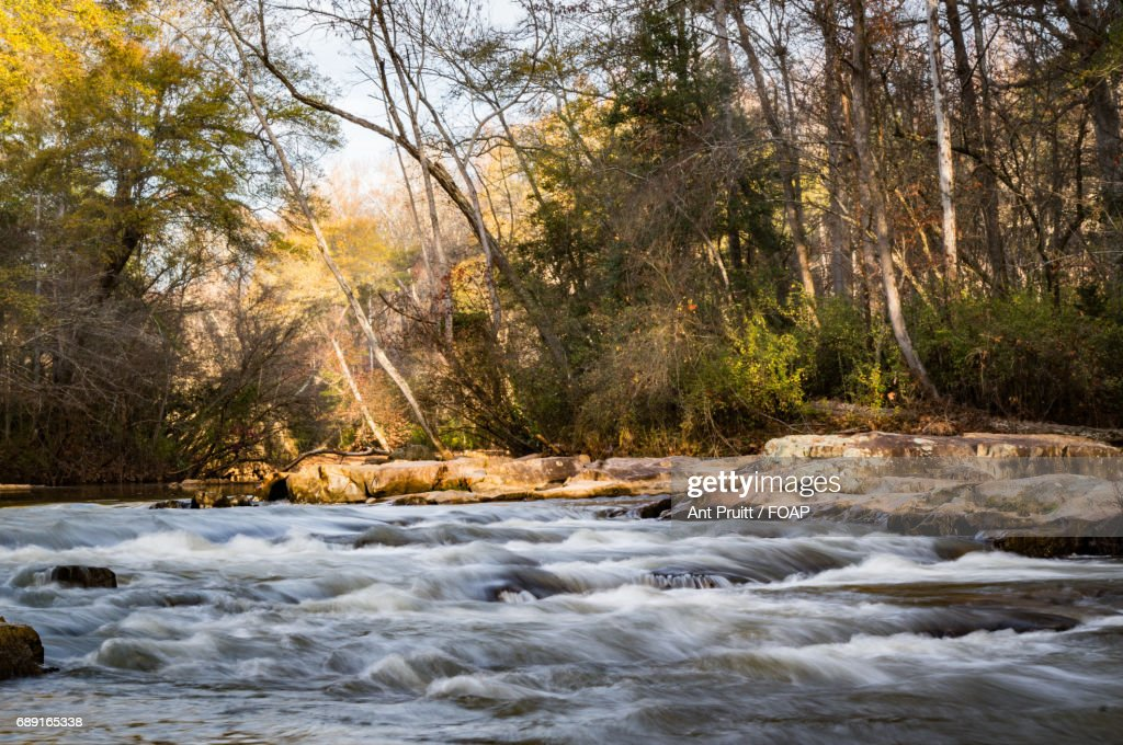 Stream flowing through forest : Stock Photo