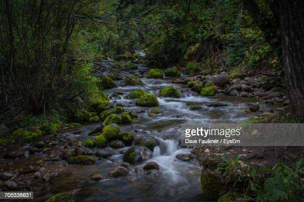 stream flowing through forest - dave faulkner eye em stock pictures, royalty-free photos & images