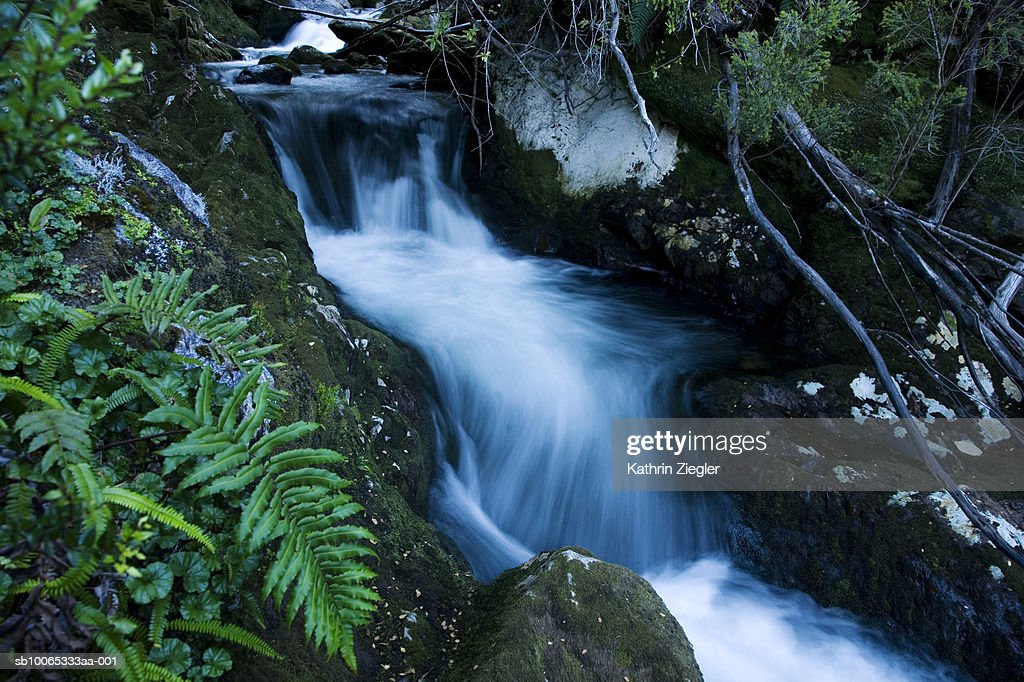 Stream flowing through forest : Foto stock