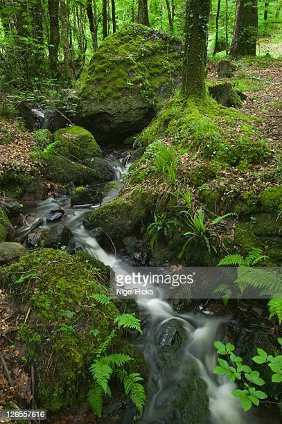 a stream flowing through oak woodland nr fingle bridge, drewsteignton, dartmoor national park, devon, great britain. - wildlife reserve stock pictures, royalty-free photos & images