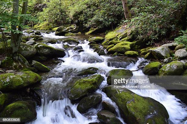 stream flowing through rocks at forest - hannah brooks stock pictures, royalty-free photos & images