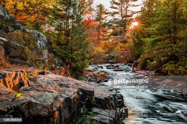 stream flowing through rocks in forest during autumn - メイン州 ストックフォトと画像