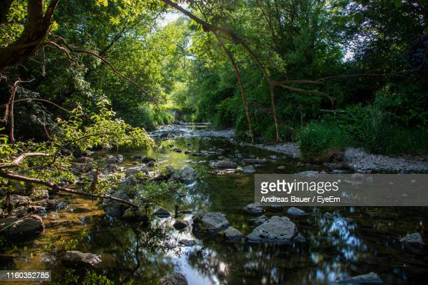 stream flowing through rocks in forest - baden württemberg stock pictures, royalty-free photos & images