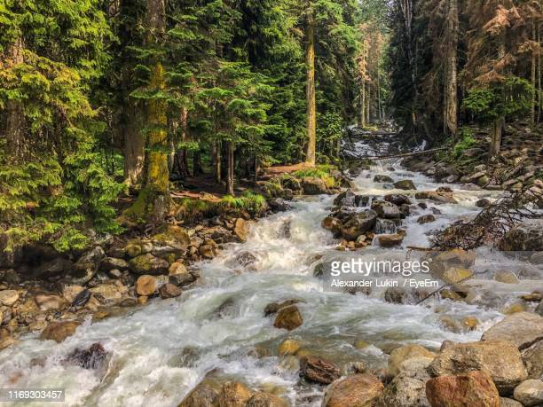 stream flowing through rocks in forest - russia stock pictures, royalty-free photos & images