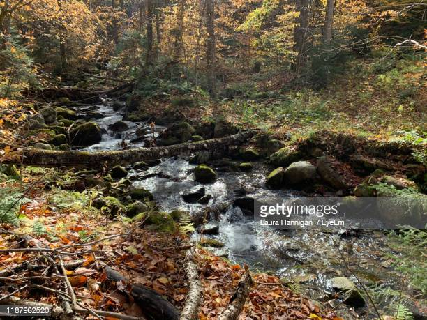 stream flowing through rocks in forest - laura woods stock pictures, royalty-free photos & images