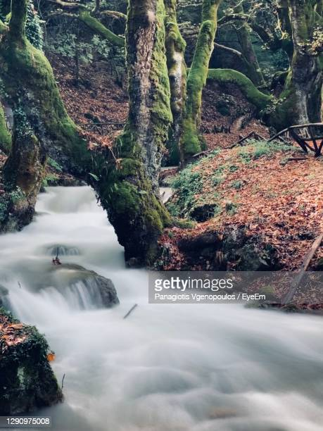 stream flowing through rocks in forest - vgenopoulos stock pictures, royalty-free photos & images