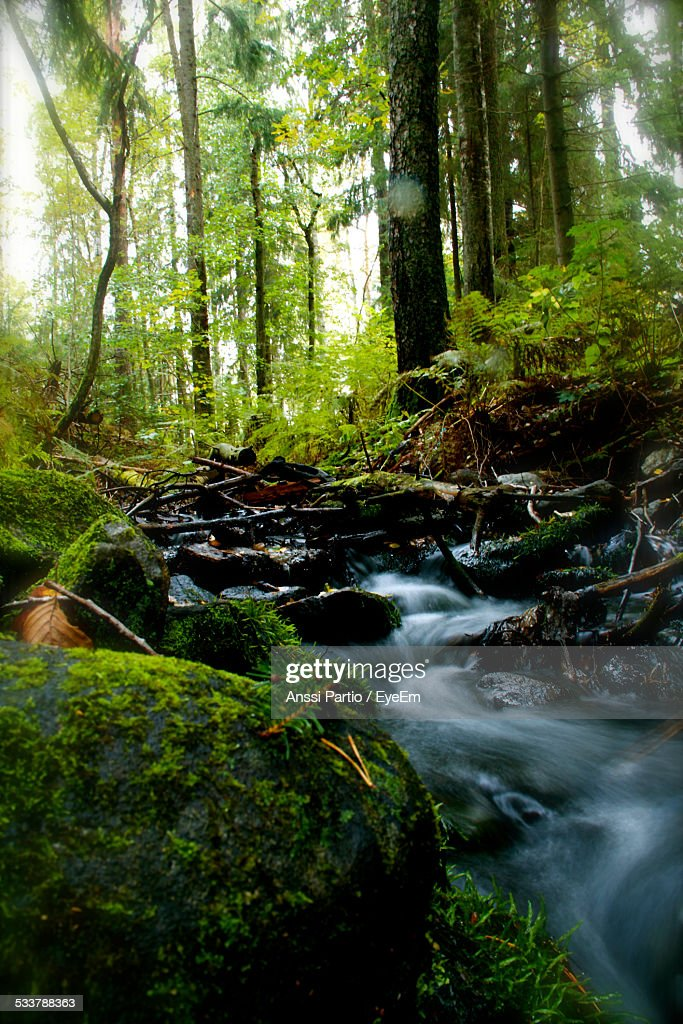 Stream Flowing Through Rocks In Forest : Foto stock