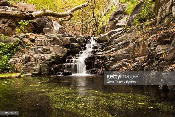 stream flowing through rocks in forest - thiem stock pictures, royalty-free photos & images