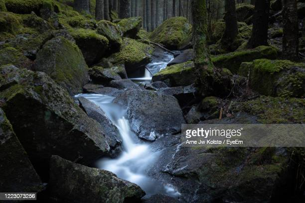 stream flowing through rocks in nordic forest - arne jw kolstø stock pictures, royalty-free photos & images