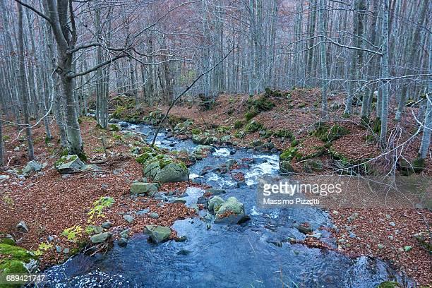 stream in a wood in autumn - massimo pizzotti foto e immagini stock