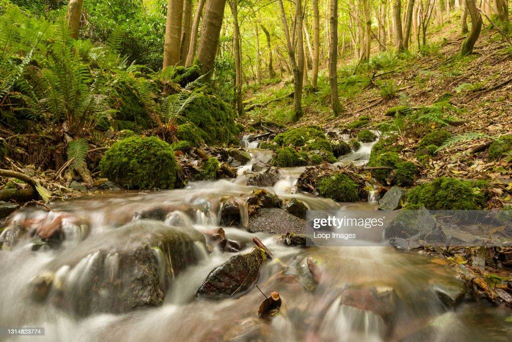 A stream in autumn running through woodland in Withy Combe in Exmoor National Park : News Photo