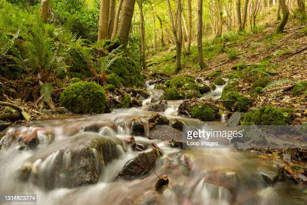 Stream in autumn running through woodland in Withy Combe in Exmoor National Park.