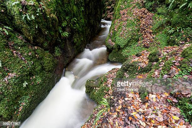 stream in autumn/fall - hannah brooks stock pictures, royalty-free photos & images