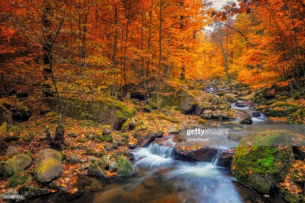 Stream in foggy Forest at autumn - Nationalpark Harz : Stock Photo