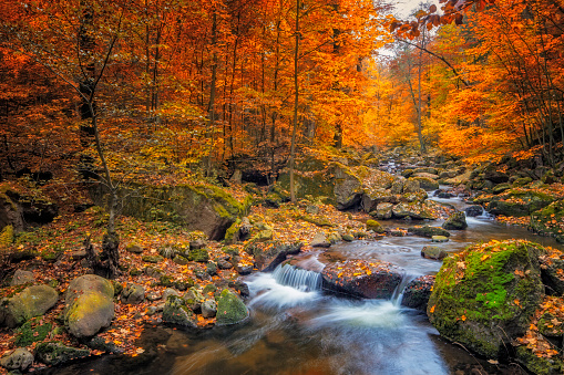 Stream in foggy Forest at autumn - Nationalpark Harz 611867074