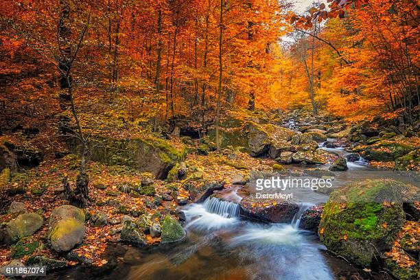 stream in foggy forest at autumn - nationalpark harz - herfst stockfoto's en -beelden