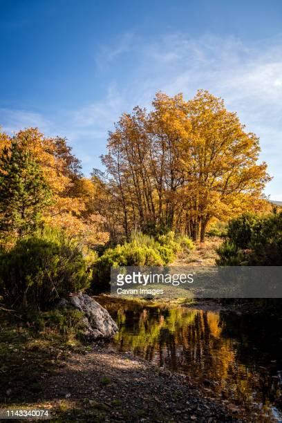 stream in forest against sky during autumn - árvore de folha caduca - fotografias e filmes do acervo