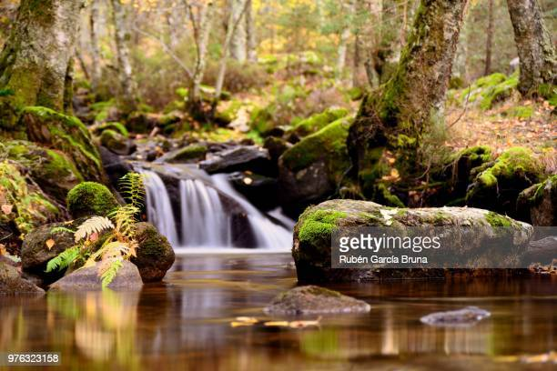 Stream in forest, Cenencia, Spain