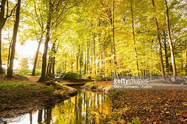 Stream In Forest During Autumn