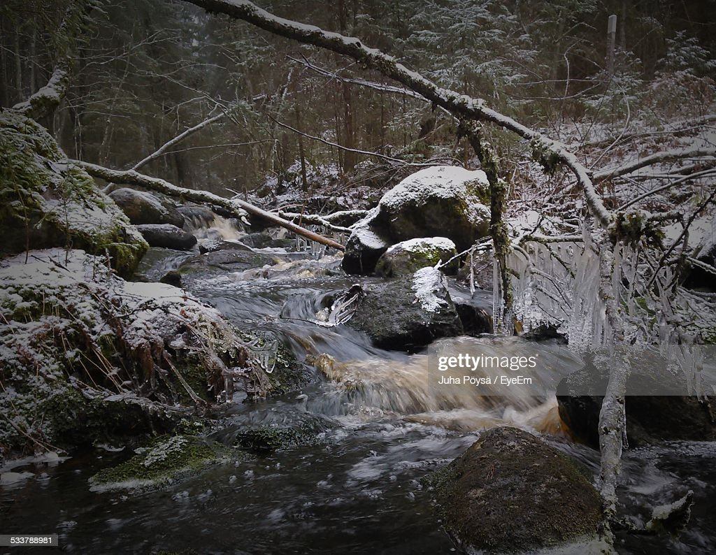 Stream In Forest During Winter : Foto stock