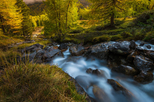 Stream In Forest, Italy