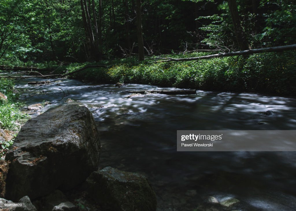 Stream in forest : Bildbanksbilder