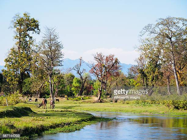 stream in lowland terai region of nepal - terai stock pictures, royalty-free photos & images