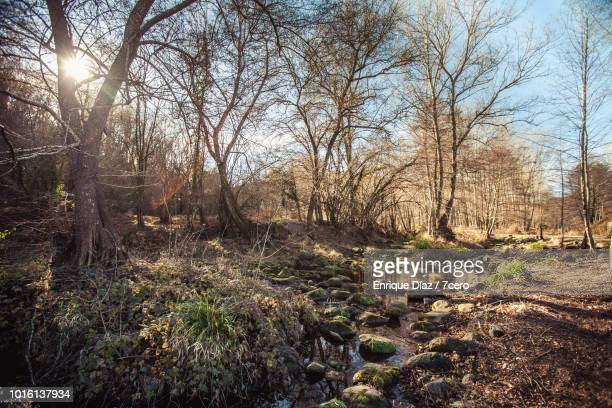 A stream in Mieres in the Winter Sun