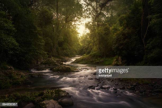 stream in rainforest, barrington tops, new south wales, australia - rainforest stock pictures, royalty-free photos & images