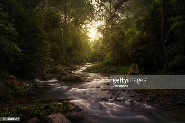Stream in rainforest, Barrington Tops, New South Wales, Australia