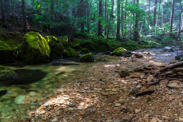 Stream in scenic forest