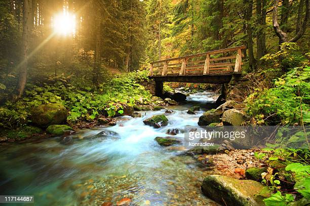 stream in the forest - stream stock pictures, royalty-free photos & images