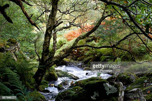 stream in the lake district, cumbria, uk - claire plumridge stock pictures, royalty-free photos & images