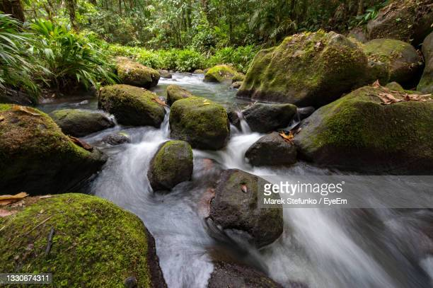 stream in tropical rainforest in costa rica - marek stefunko stock pictures, royalty-free photos & images