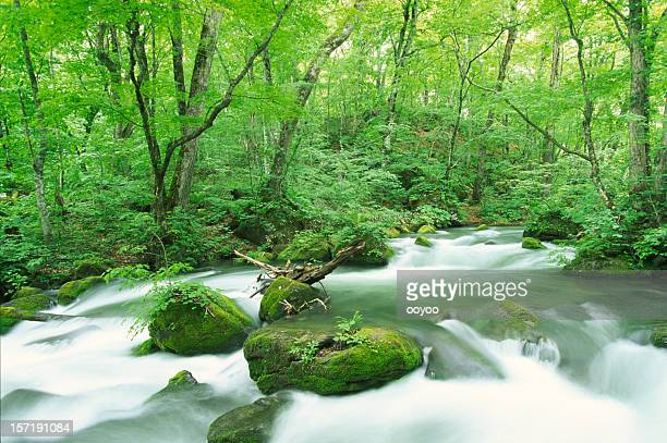 ストリームの森