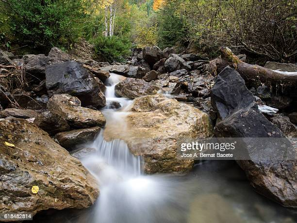 Stream  of high mountain between big rocks crosses a forest in autumn