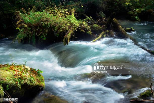 a stream of water flowing on the surface of river bank. - riverbank stock pictures, royalty-free photos & images
