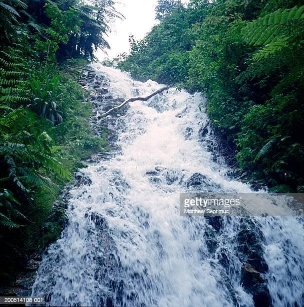 Stream of water flowing through rainforest