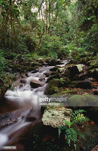 stream running through the eternally damp rainforest. - ranomafana national park stock photos and pictures