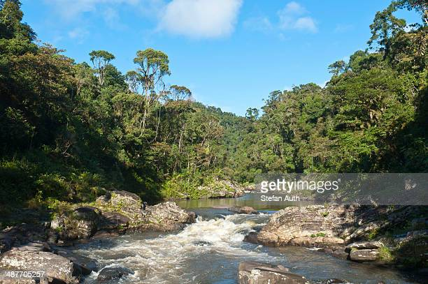stream, small waterfall in jungle, primary forest, national park ranomafana, fianarantsoa province, madagascar - ranomafana national park stock photos and pictures