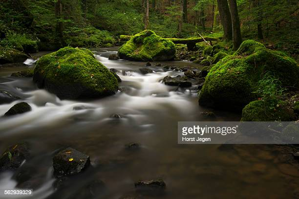 Stream, Strohner Schweiz, Daun, Vulkaneifel, Rhineland-Palatinate, Germany